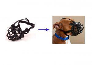 מחסום אילוף בצבע שחור לכלב מס 5 פטקס